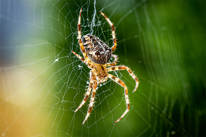 fobia a las arañas